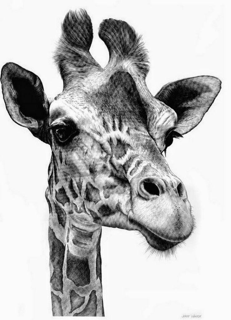 dibujos-de-animales-a-lapiz