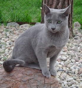 Koty To Co Powinieneś Wiedzieć O Kociakach