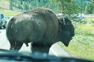 Yellowstone National Park Buffalo from www.traceeorman.com