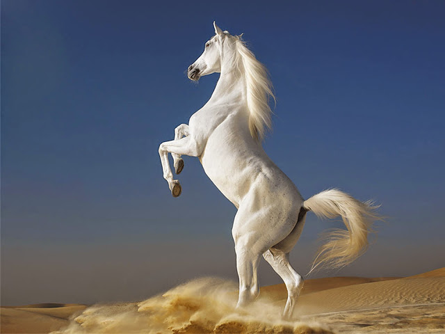 23 Beautiful <b>HD Horse</b> Wallpapers - HDWallSource.com