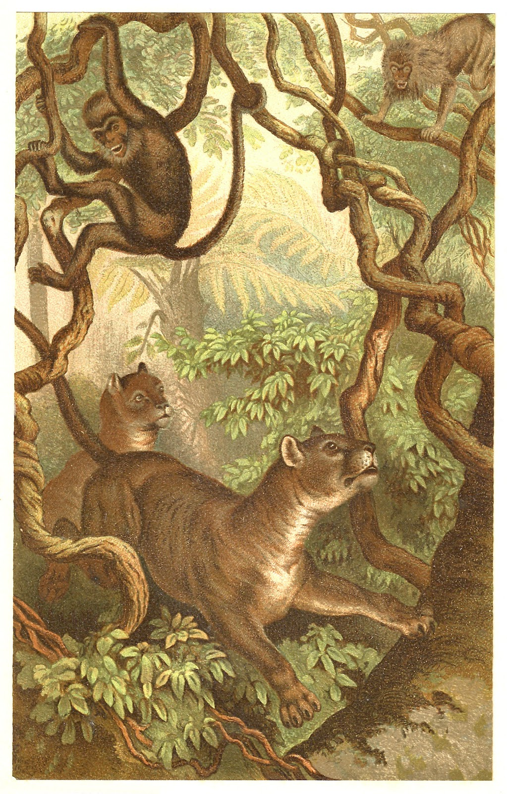 Antique images free animal graphic victorian for Classic jungle house for small animals