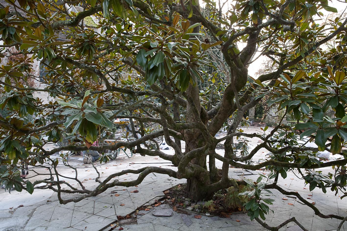 Revue jardins valentine de ganay un jardin persan en le for Jardins remarquables ile de france