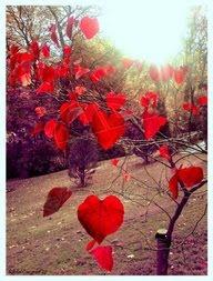 Love Nature?
