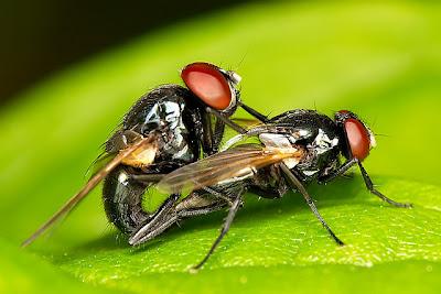 Macro photography bugs