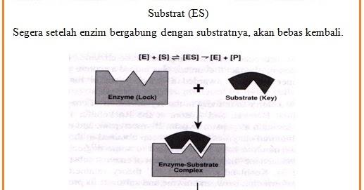 Getah Enzim Inti Sari Biologi