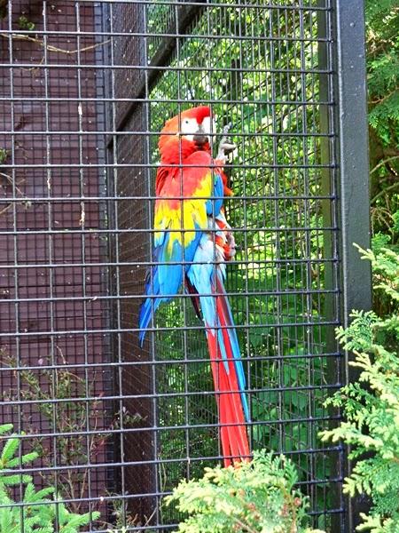 zoo Kraków, Kraków, zoo,