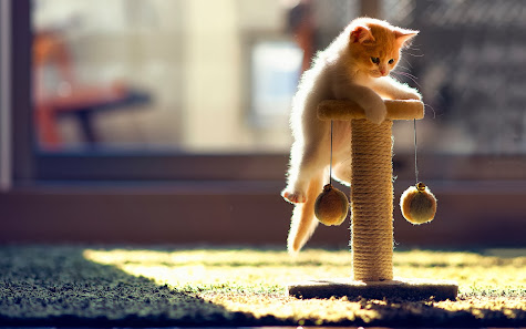 Cute kitten cat playing animal wallpaper 1920x1200