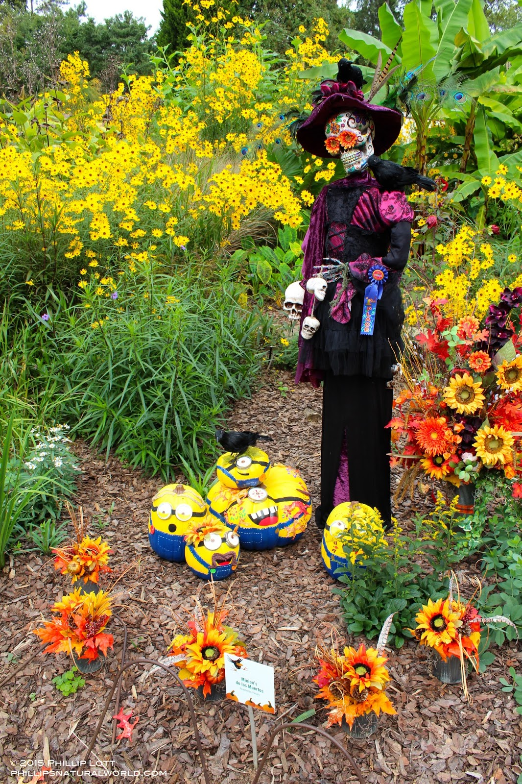 Halloween Scarecrows | Phillip\'s Natural World
