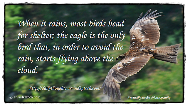 Life Quote, Eagle, Rains, Shelter, Daily Quote,