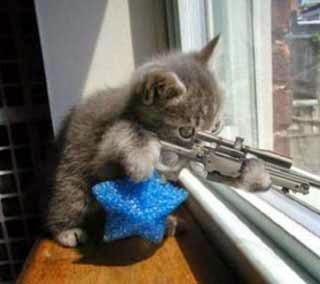 kucing jadi sniper