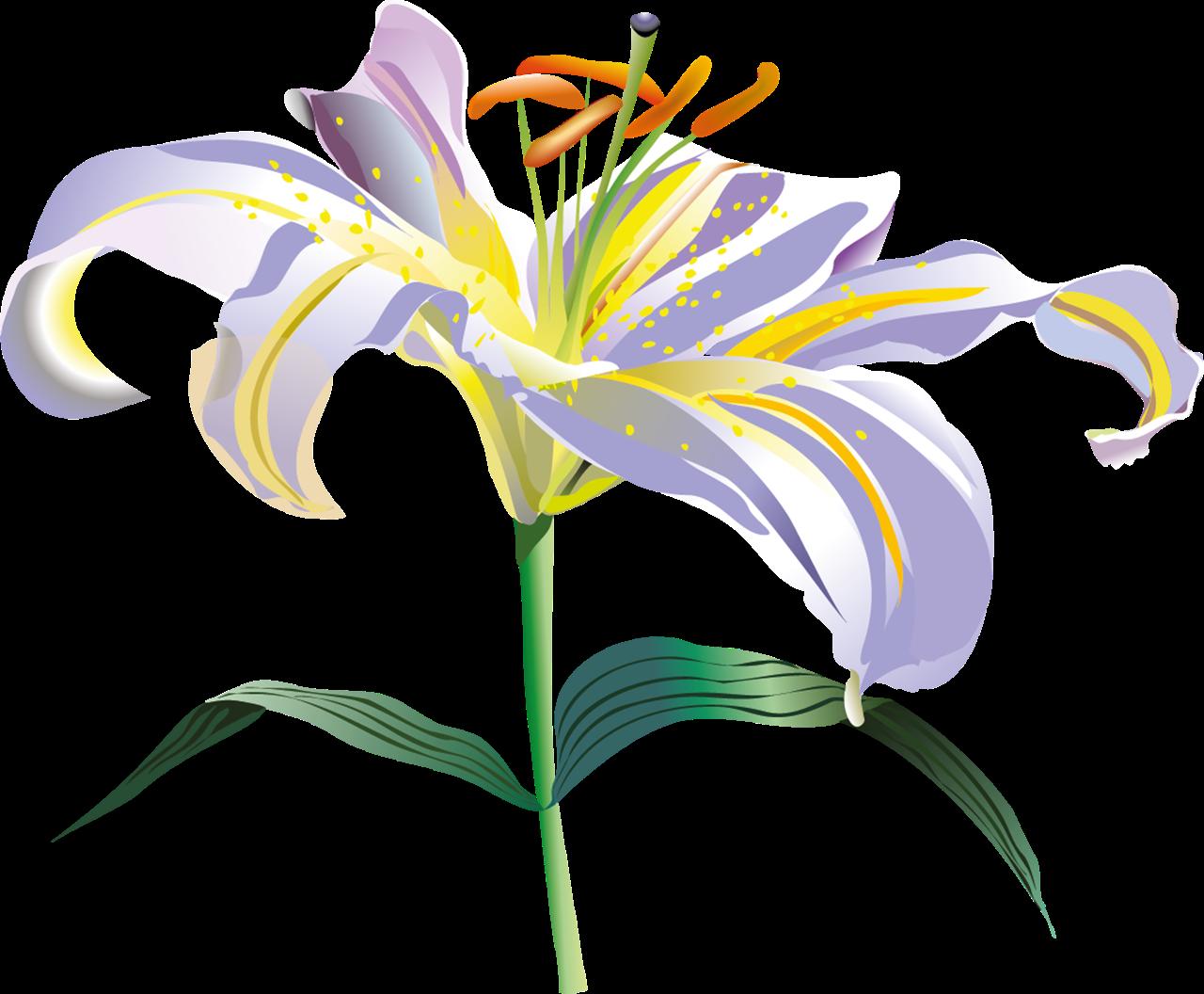 Flores vectoriales con fondo transparente png Arte digital - Imagenes De Flores Transparentes