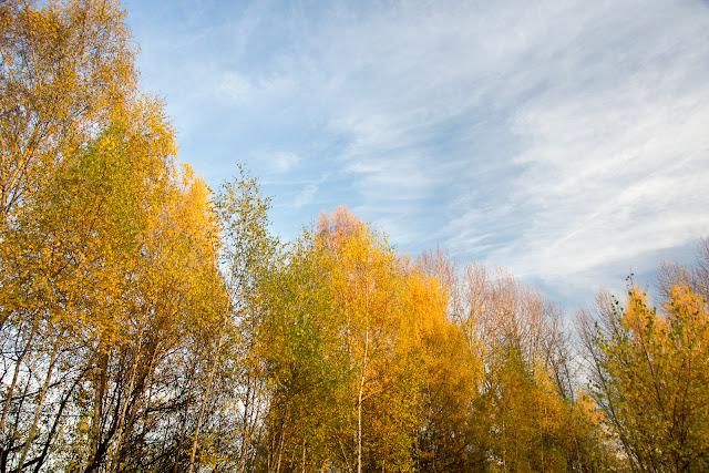 Jesienna fotografia krajobrazu. Jesień w mieście Ruda Śląska. fot. Łukasz Cyrus, Katowice