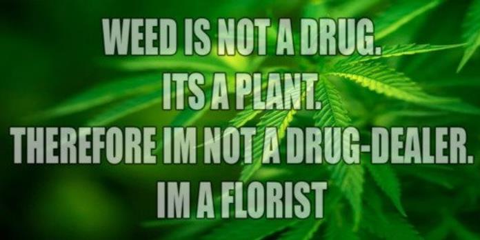 drugs leaves quotes marijuana - photo #9