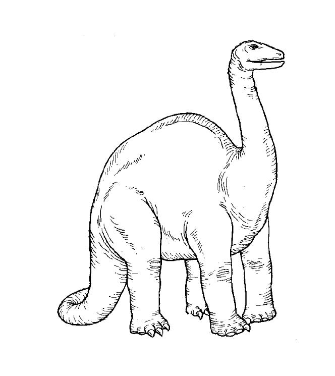Dinosaurios para colorear: Apatosaurus para colorear