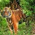 Κυβερνο-λαθροθήρες, η νέα απειλή για τα άγρια ζώα;