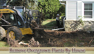 Integrity workers removing overgrown plants