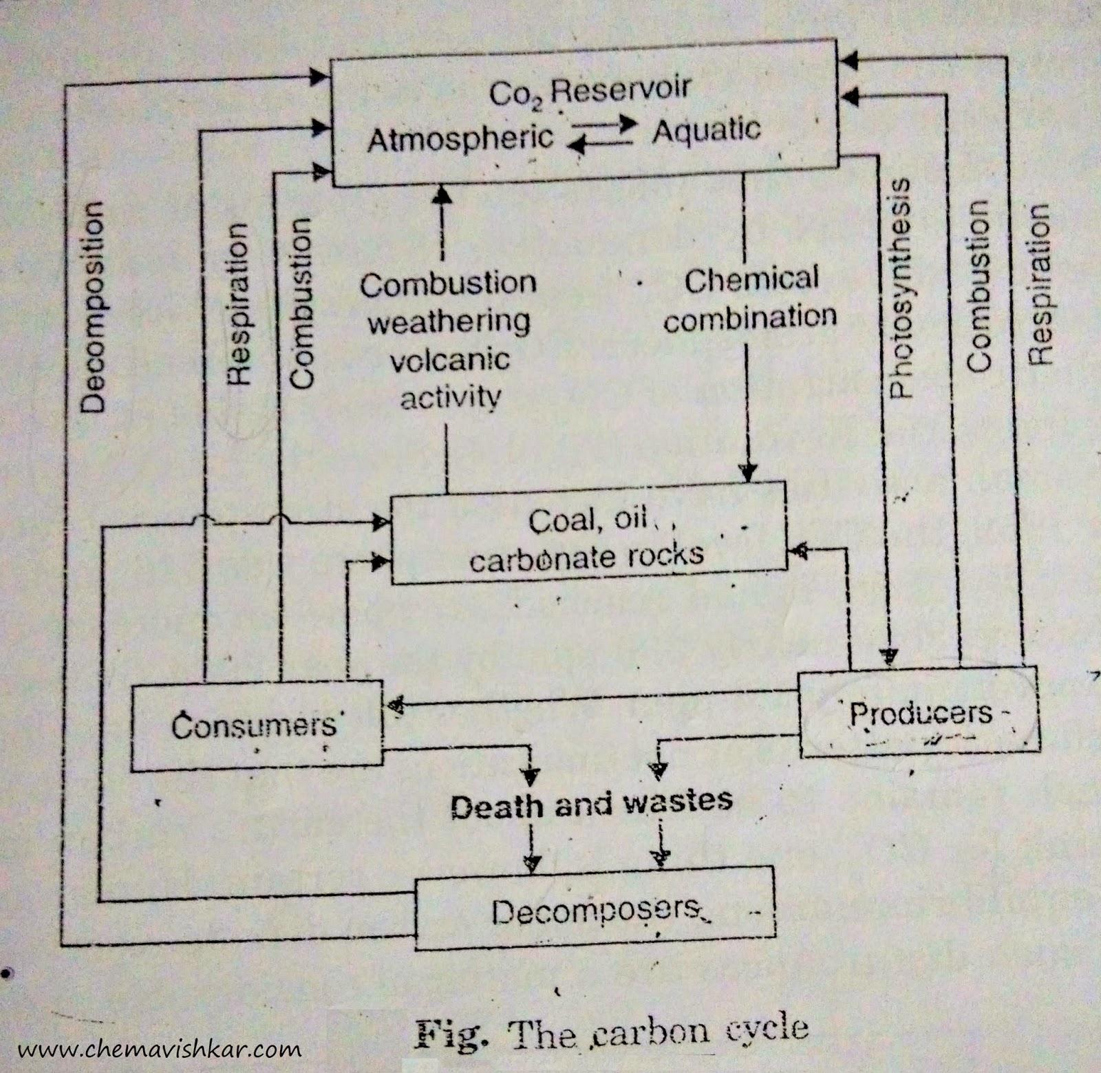 Chemavishkar carbon cycle pooptronica