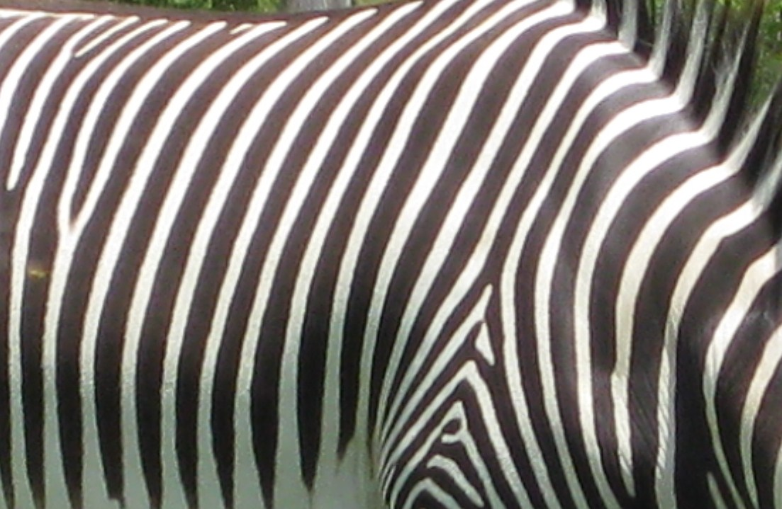 animal patterns in nature - photo #6