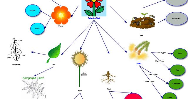 It365 G002 Summer Sarah Kellar Parts Of A Plant Concept Map