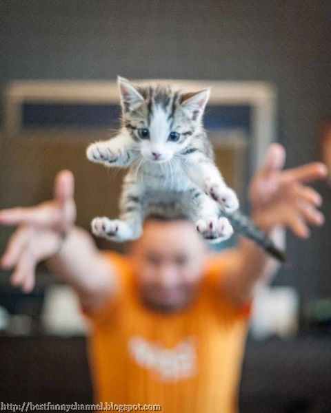 Flying kitten 2