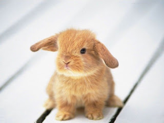 cute ra baby animal