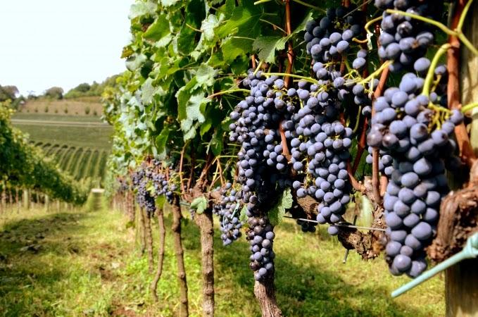 turismo vinho