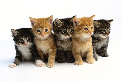 5-kucing-lucu.jpg (482×327)