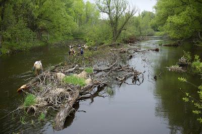 Michigan DNR: Improving habitat on the Au Sable River's North Branch