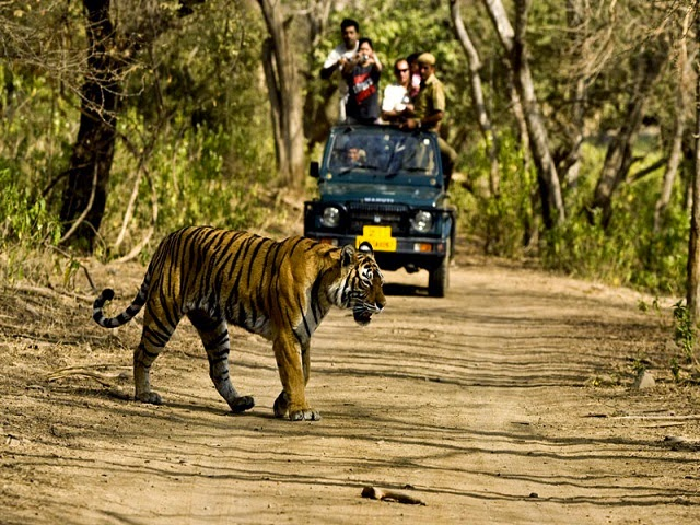 Jeep Safari in Jim Corbett National Park