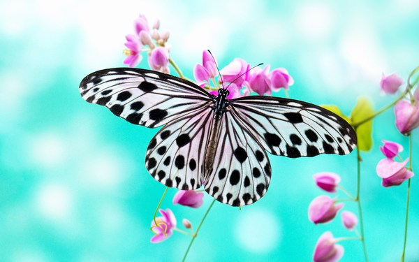 Beautiful Butterfly Images HD for Mobile