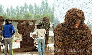 Gossip Lanka, Hiru Gossip, Lanka C News - A beekeeper in China covered in 109 kg of bees sets a new Guinness World record