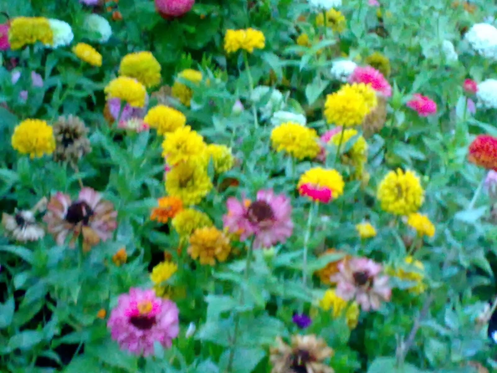Fotos de flores muy hermosas - Flores que aguantan el sol ...