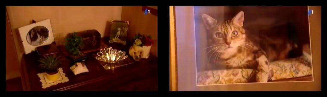 animalia documentaire mon chat est mort ce soir. Black Bedroom Furniture Sets. Home Design Ideas