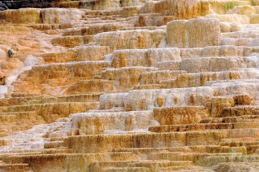 Mammoth Hot Springs 144