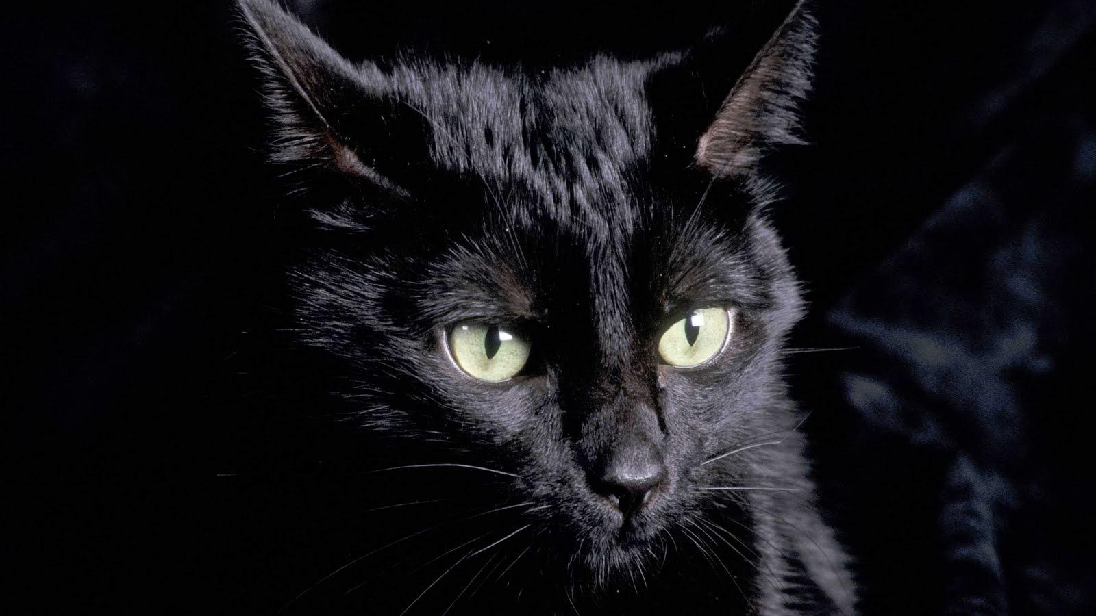 Menabrak Kucing Membawa Sial  (Antara Mitos dan Logika)