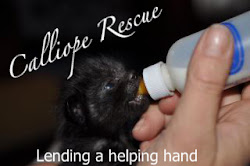 Calliope Rescue, Inc.