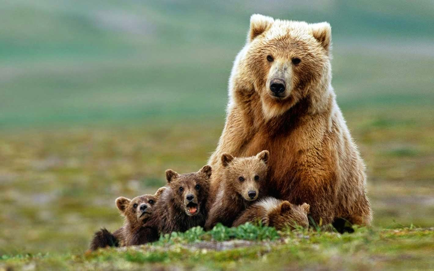 Bear Mother & Kids Love