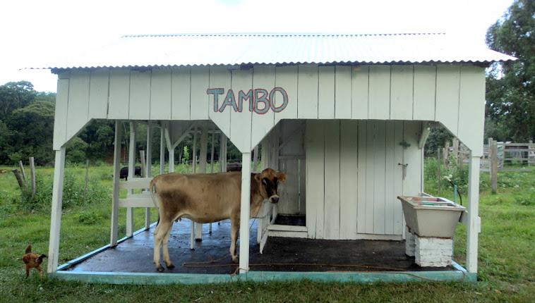 Tambo Modelo