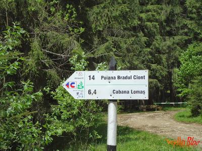 Poiana Bradul Ciont si Cabana Lomas