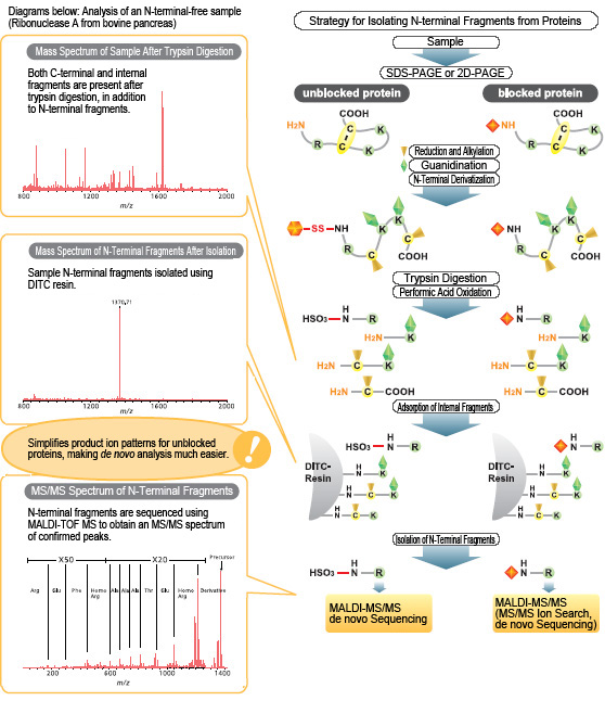 protein primary sequence analysis pdf