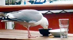 En sultn Svolværgjest