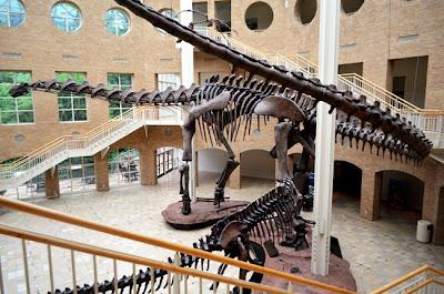 Argentinosaurus, Fernbank Museum of Natural History