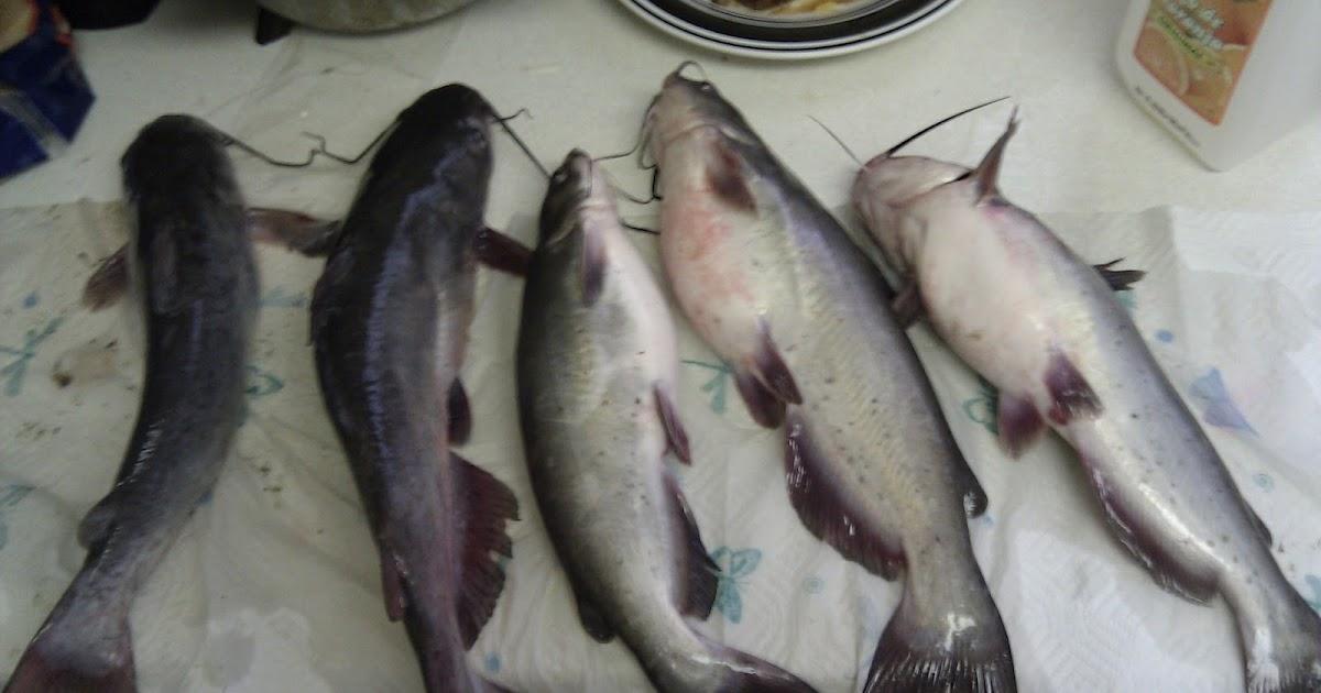 San antonio fishing southside lions park for Texas fishing bag limits