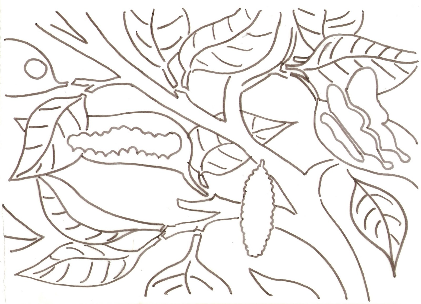 Free Coloring Pages Of Frog Lifecycle
