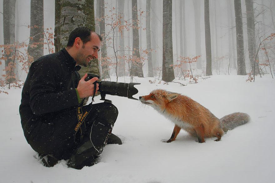 Лисицы: Веселые фотографии (19 фото)