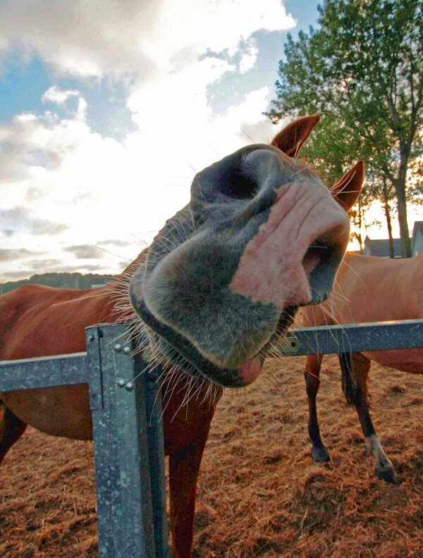 Funny animals of the week - 6 December 2013 (35 pics), funny close up pic of horse