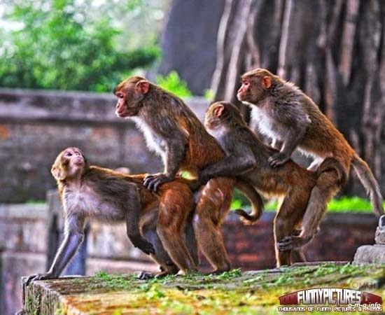 Foto Lucu Paling Gokil