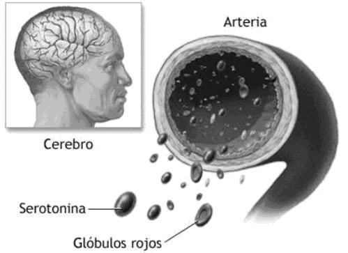 Alimentos Ricos Em Serotonina E Dopamina