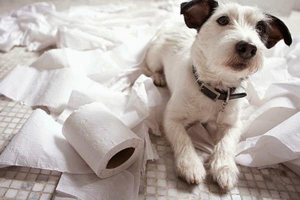 cachorro destruindo papel higienico