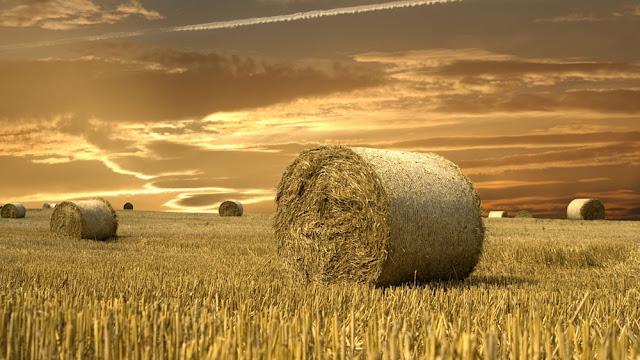biomasă